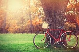 Vintage bicycle waiting near tree
