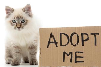 pet-adoption.png
